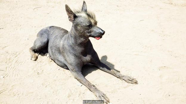 High Angle View Of Hairless Dog On Sunny Day